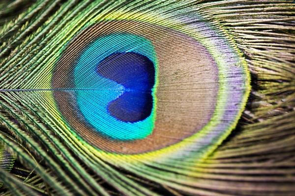 Peacock eye.1 by MrsCoops