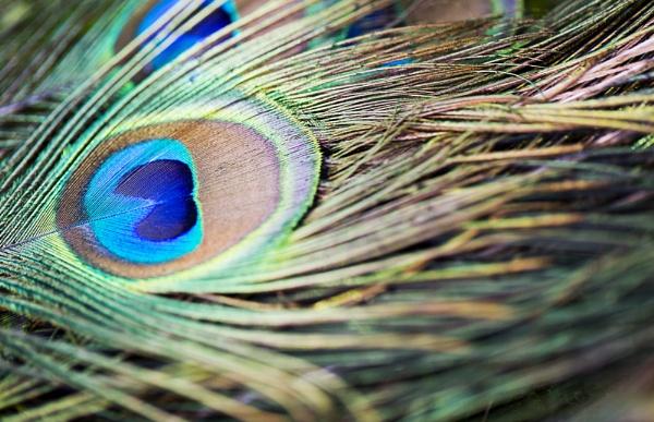 Peacock eye.2 by MrsCoops