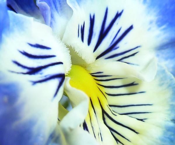 Flower by steve_fdr