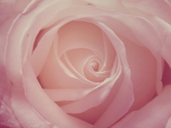 rose by megan99