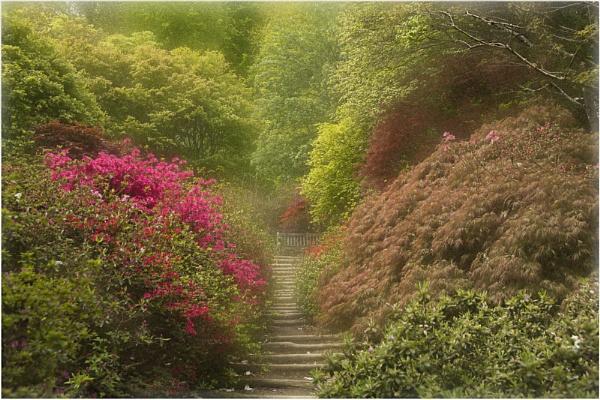 Winkworth Arboritum by Lillian