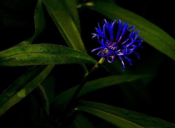 Purple flower by turniptowers