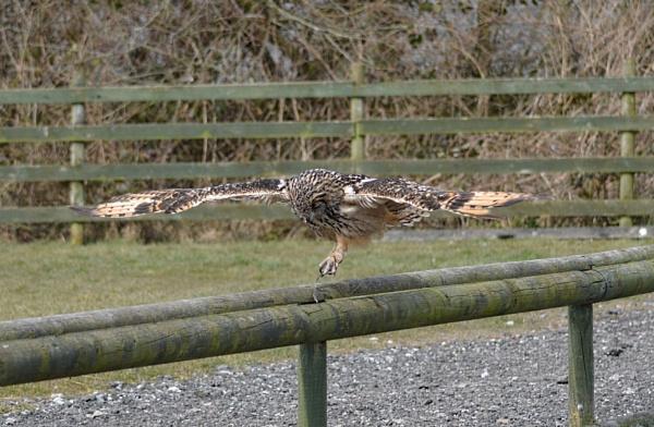 owl by supermario1