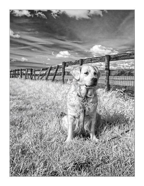 InfraRed Friend Portrait by conrad