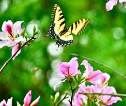 Flutterby.... Butterfly