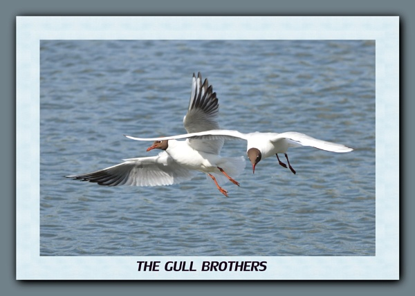 The Gull brothers by gonewiththewind