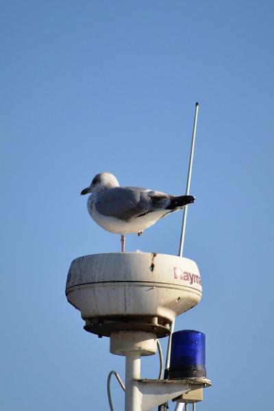 Radar by lenocm