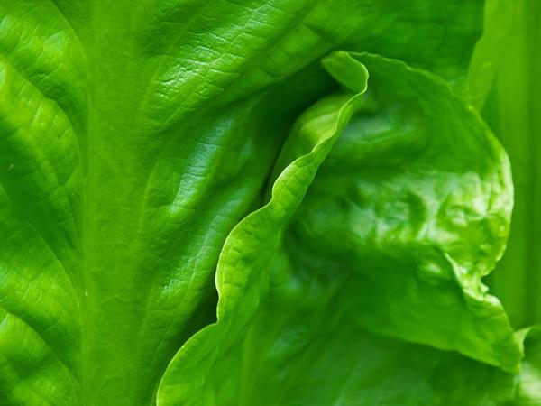 Skunk Cabbage by victorburnside