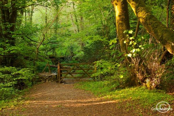 Woodland Greens by CHRISB911