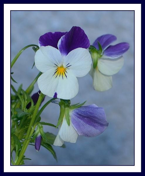Another Flower by jcherskine