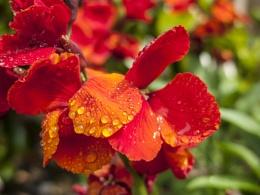 Just a flower 2.