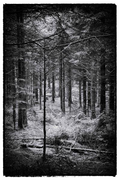 Gratloe Woods by jholmes