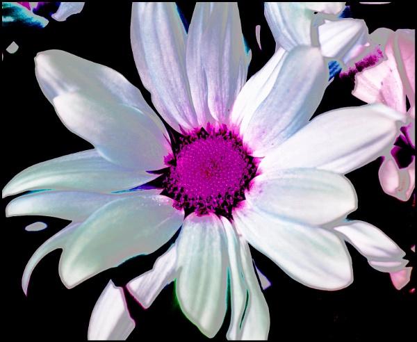 Flower by catherinekp79