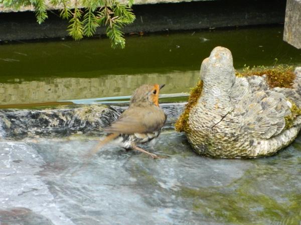 Having a splash by denbo