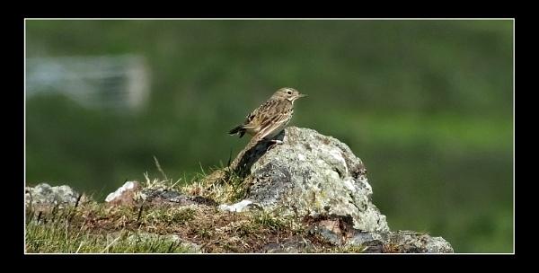 little bird by paulmanneringphotos