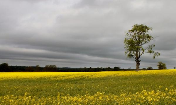 golden landscape by kevlense