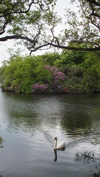 swan song by kevlense