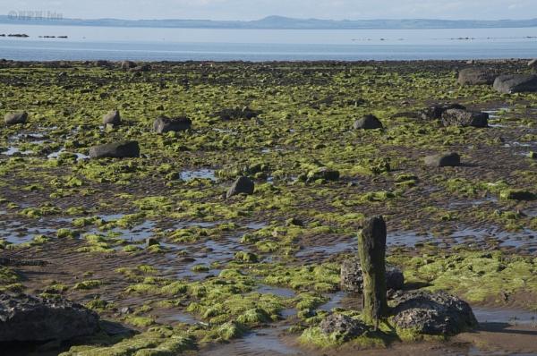 Greenish Rocks by phani1505