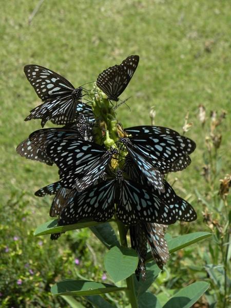 Butterfly bouquet by Herrero