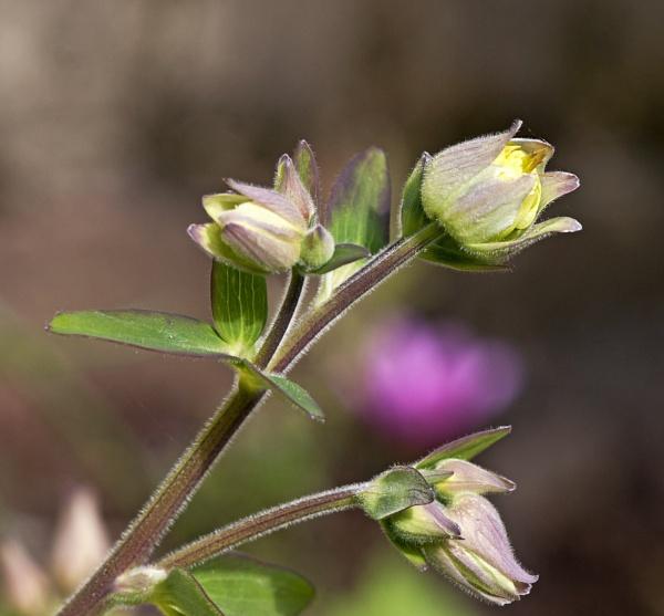 Garden flower by pp1