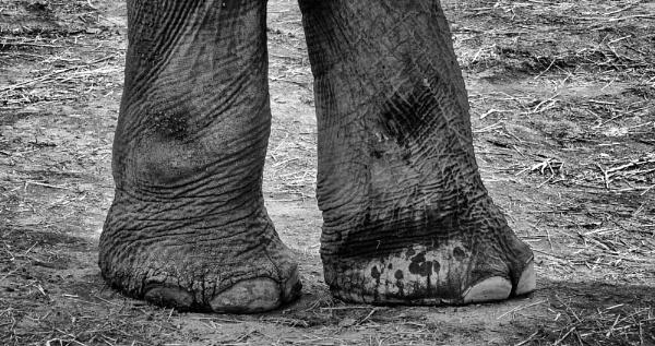 Big feet by Jallingham