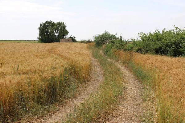 Farm by Rasoul