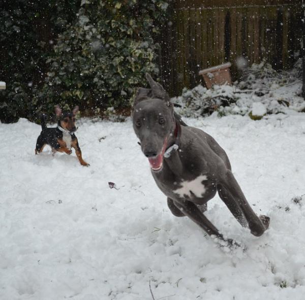 We love the snow! by Redziggy