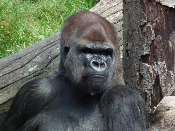King Kong by gaza1957
