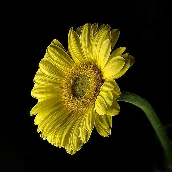 Mellow Yellow by Big_Beavis