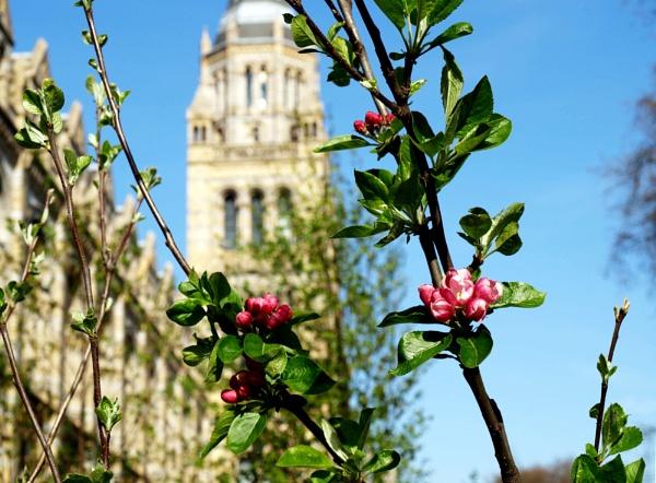 Blooming in London by DavidInBulgaria