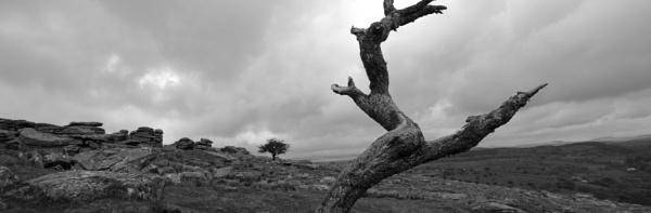 Dartmoor 2013 by Dugs