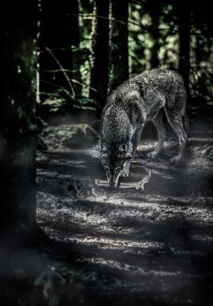 Wolf by blomman