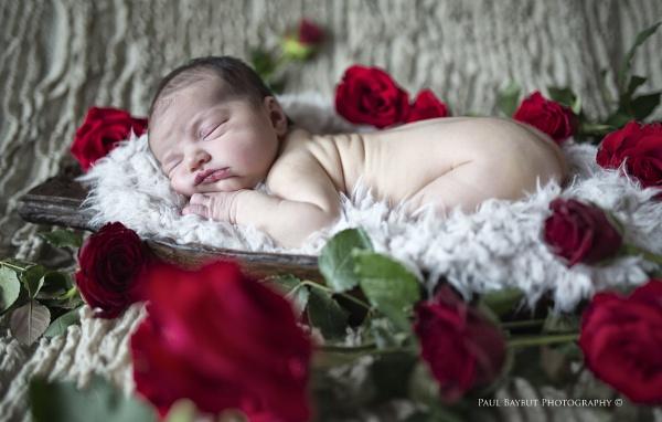 A Rose Amongst Roses by paulbaybutphotography