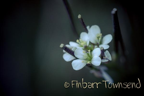 Tiny Beauty by fintownsend