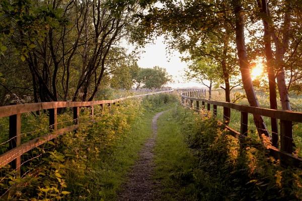 The Homeward path by Shedboy