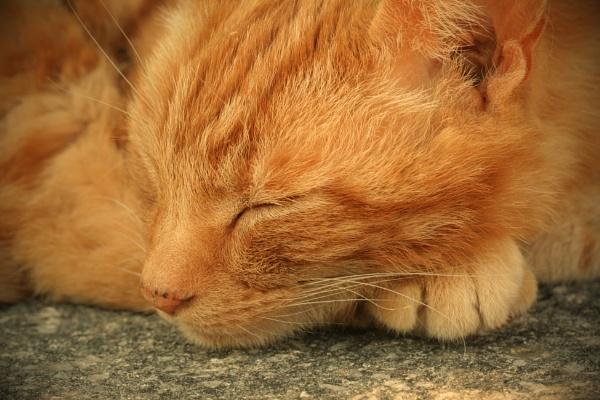 Sweet dreams by Tigger1
