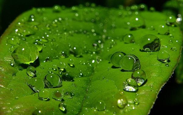Rain drops on leaf by turniptowers