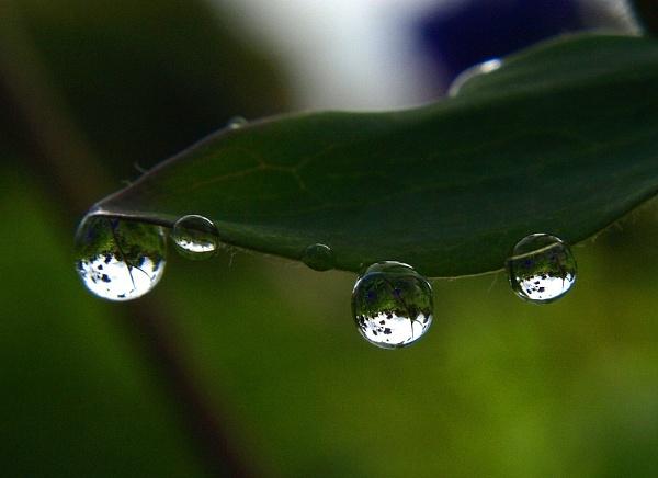 Rain drops by turniptowers