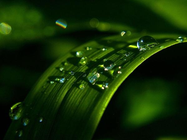 Water drops by turniptowers