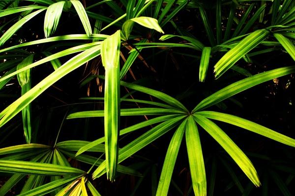 Bursting Green by Potra