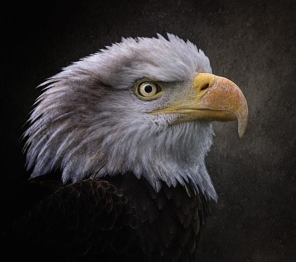 Eagle 2 by clintnewsham