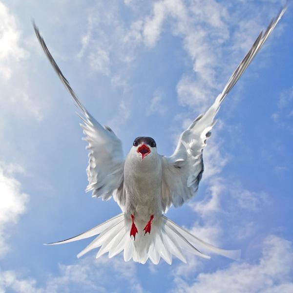 I aint no angel by Jamie_MacArthur