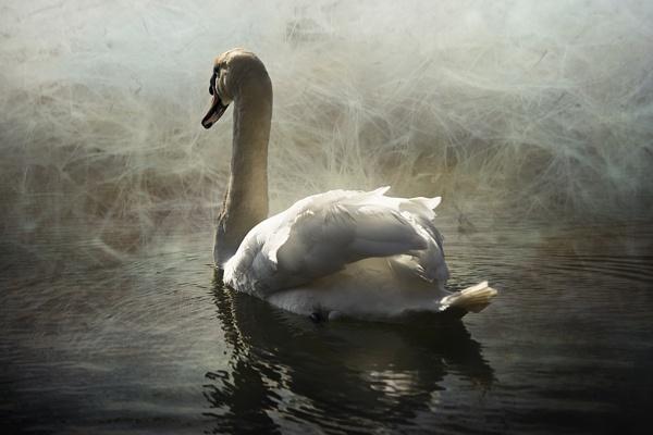 Swan Mist by Audran