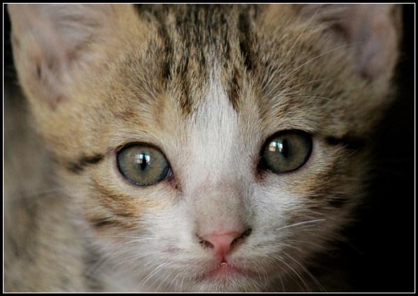 Cute KITTY by Dureja