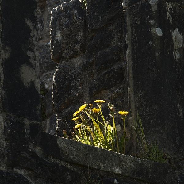 Shining in the Shade by Irishkate