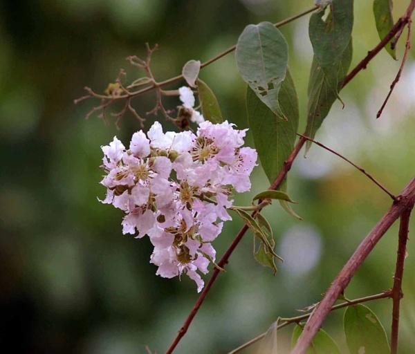 flower by manashi