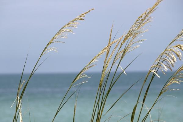 Gulf Coast Morning by Laura_F