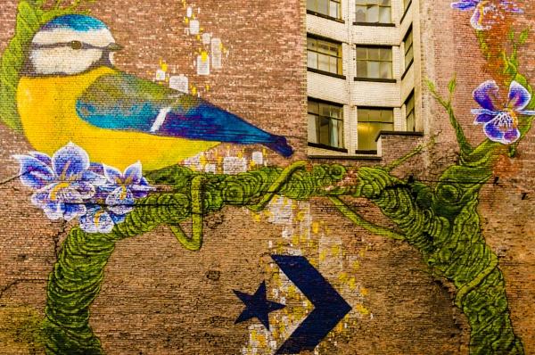 blue bird by eric2005