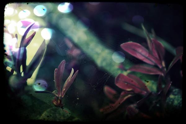my garden by Aenima
