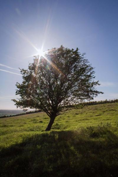 Tree with sunburst by AlanJ
